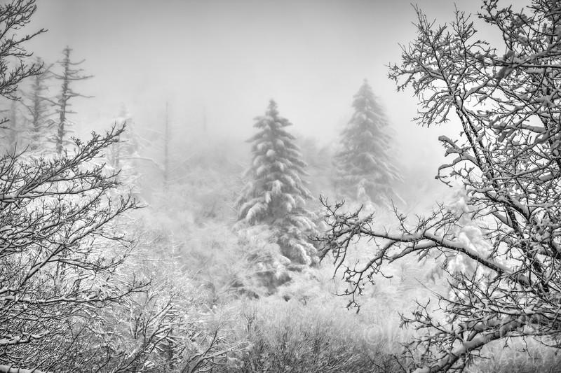 A Whisper of Winter B&W