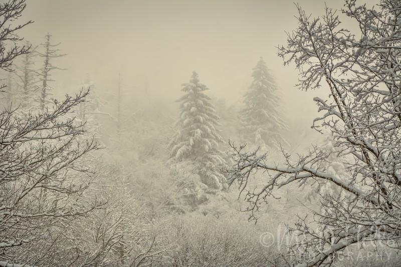 A Whisper Of Winter