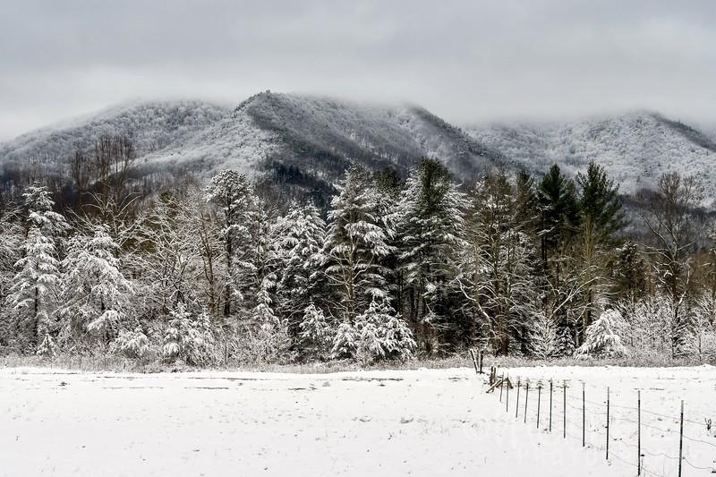 Winter By Design