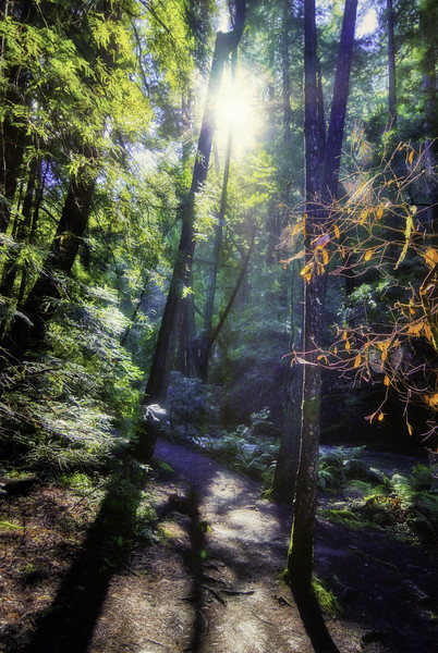 Sunlight shining through along the Bootjack Trail