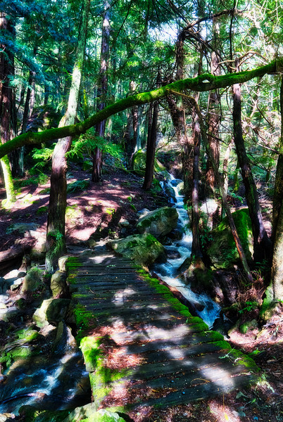 A creek crossing in Muir Woods National Monument