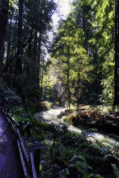 The sun shining through on Redwood Creek