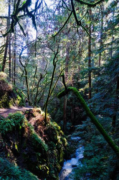 Climbing through Muir Woods