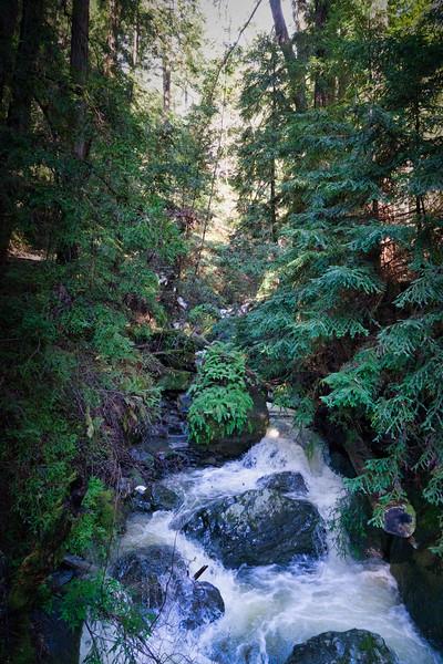 Winter runoff in Muir Woods National Monument
