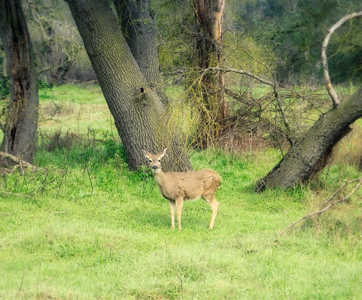 A deer stopping to pose for a pic