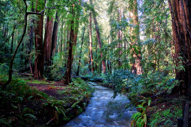 Redwood Creek rushing after winter storms