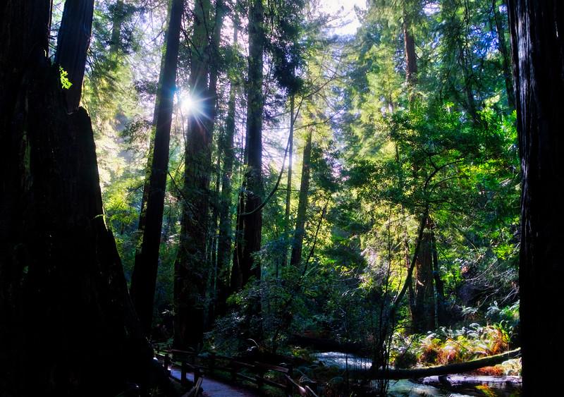 The sun filtering through on Redwood Creek
