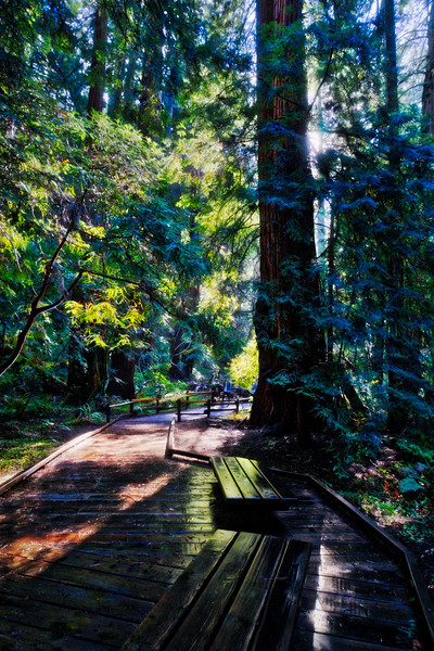 Benches along the Redwood Creek Trail