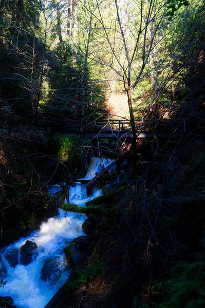 A bridge over Redwood Creek