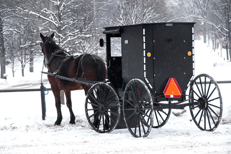 amish buggy horse sm.jpg