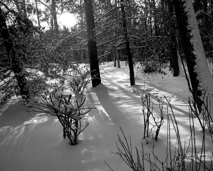 Winter Morning Light (16x20) sm.jpg