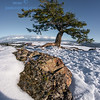 Tree-at-Buttes-5008