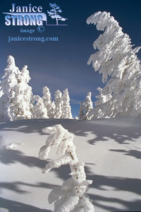 Snow Gosts Backcountry Skiing
