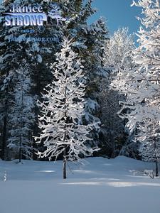 winter- trees 2013-3016
