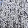 X-C-Ski-Trail-3040