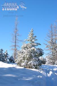 144-4405 Tree & Snow