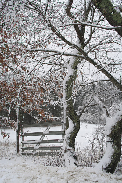 SC 75 Snowy Fence & Trees in Hollis