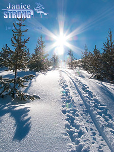 3968 Winter Sunburst