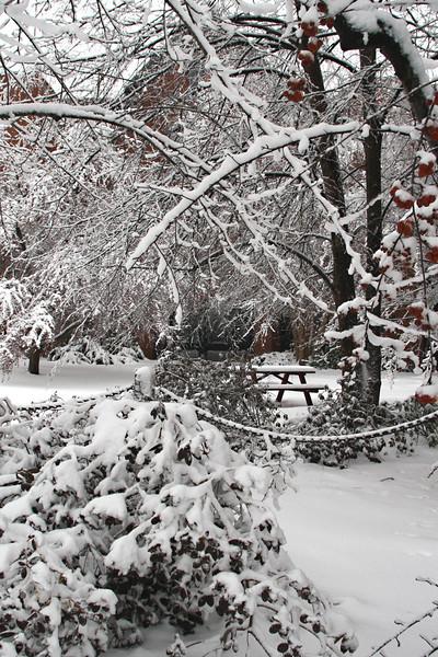 NA 50 Snowy Picnic