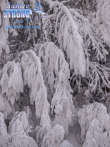 Frosted Trees At Fairmont Hot Springs Winter-2014-3103