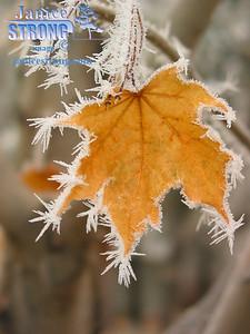 141-4122 Maple Leaf