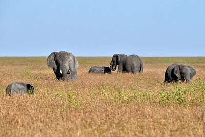 NEA_0922-Elephants