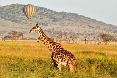 NEA_1094-Giraffe-Balloon
