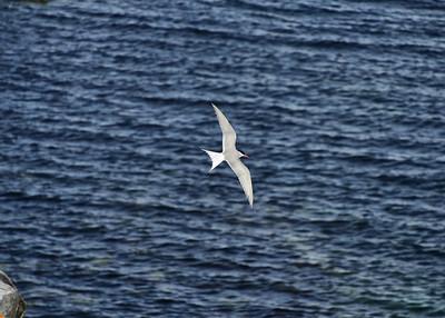 ANT_2122-7x5-Bird