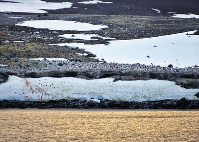ANT_1735-7x5-Penguin Island