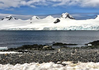 ANT_2425-7x5-Penguin Trails