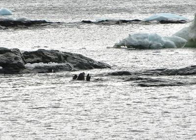 ANT_4514-7x5-Seals at play