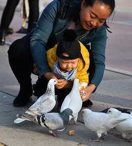 CHI_3395-Boy feeding Pigeons