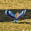 IND_2577-7x5-Bird in Flight