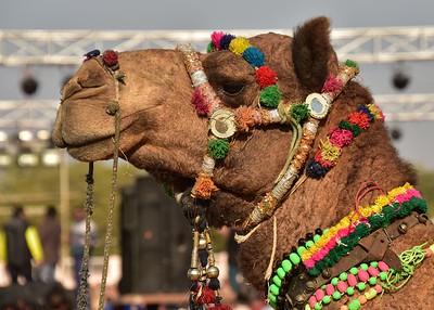 IND_0812-7x5-Camel Dress up