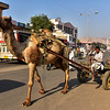 IND_3289-7x5-Camel cart-Traffic