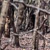 IND_4841-7x5-Leopard sighting