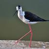 IND_3088-7x5-Bird