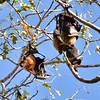 IND_2609-7x5-Fruit Bats