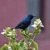 IND_3898-7x5-Bird