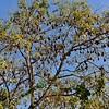 IND_2629-7x5-Fruit Bats
