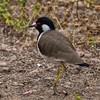 IND_3793-7x5-Bird