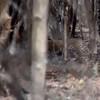 IND_4838-7x5-Leopard sighting