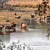 IND_4412-7x5-Samba Deer-Croc-Wild boar