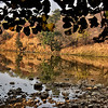 IND_4570-7x5-Reflection