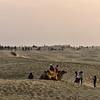 IND_1763-7x5-Camels on the desert