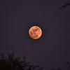 IND_0568-7x5-Moon over Mandawa