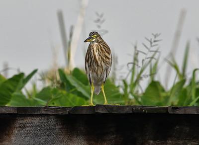 MYA_7018-Bird