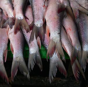 MYA_2862-Fish Tails