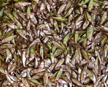 MYA_2829-Fish Market