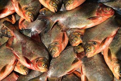 MYA_2860-Fish Market